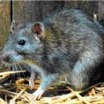 Columbus Rodent Control & Removal